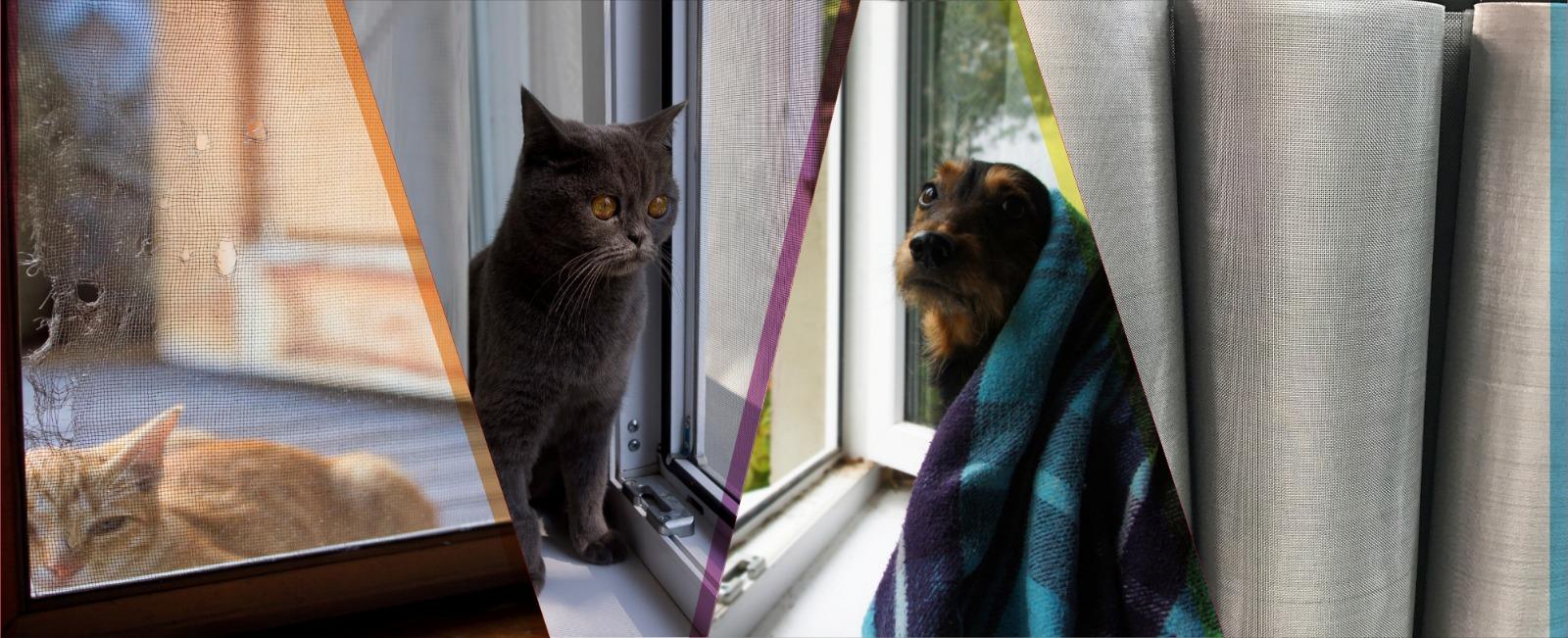 Ankara Eryaman Kedi Köpek Sinekliği